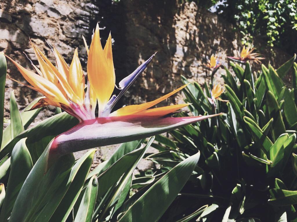 Eine Blume auf Madeira